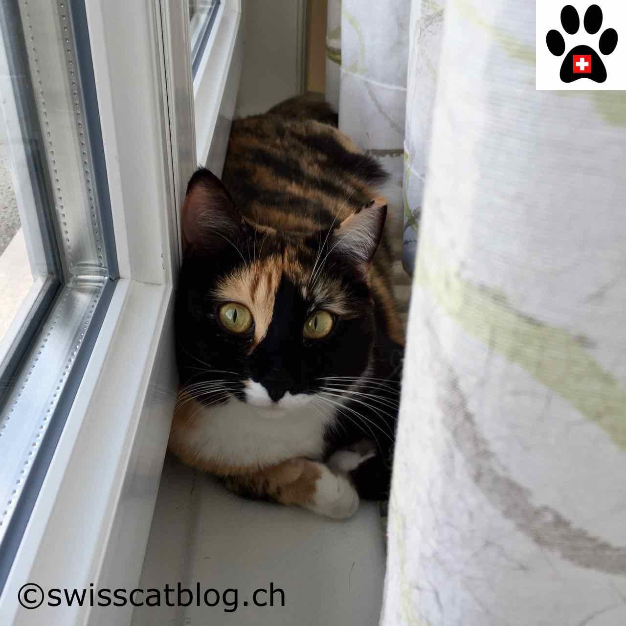 derri re le rideau the swiss cats. Black Bedroom Furniture Sets. Home Design Ideas