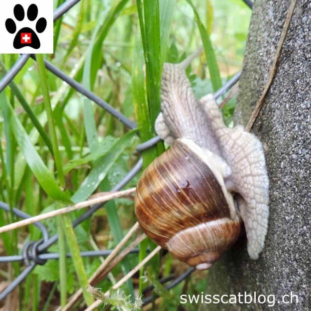 climbing snail