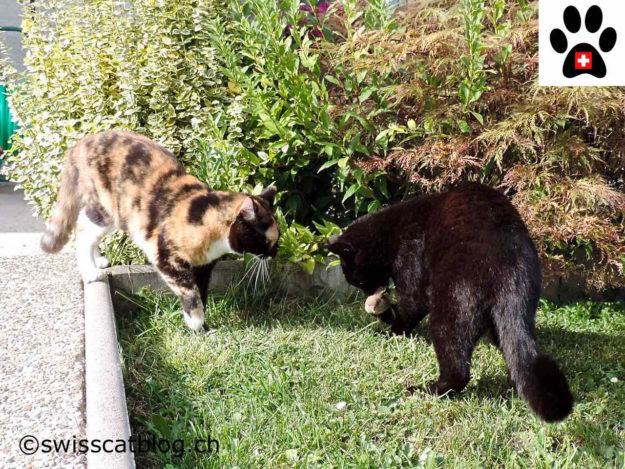 two garden wildcats