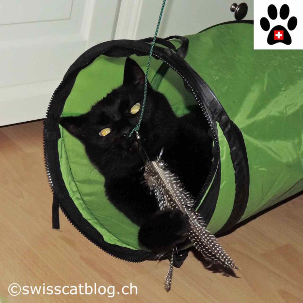 Zorro playing with the Kittycobra in his tunnel