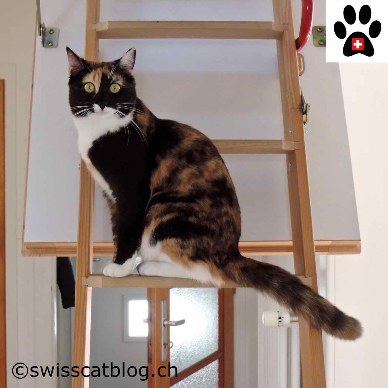 Come occupare il suo gatto e migliorare il suo benessere - Come fare il bagno al gatto ...