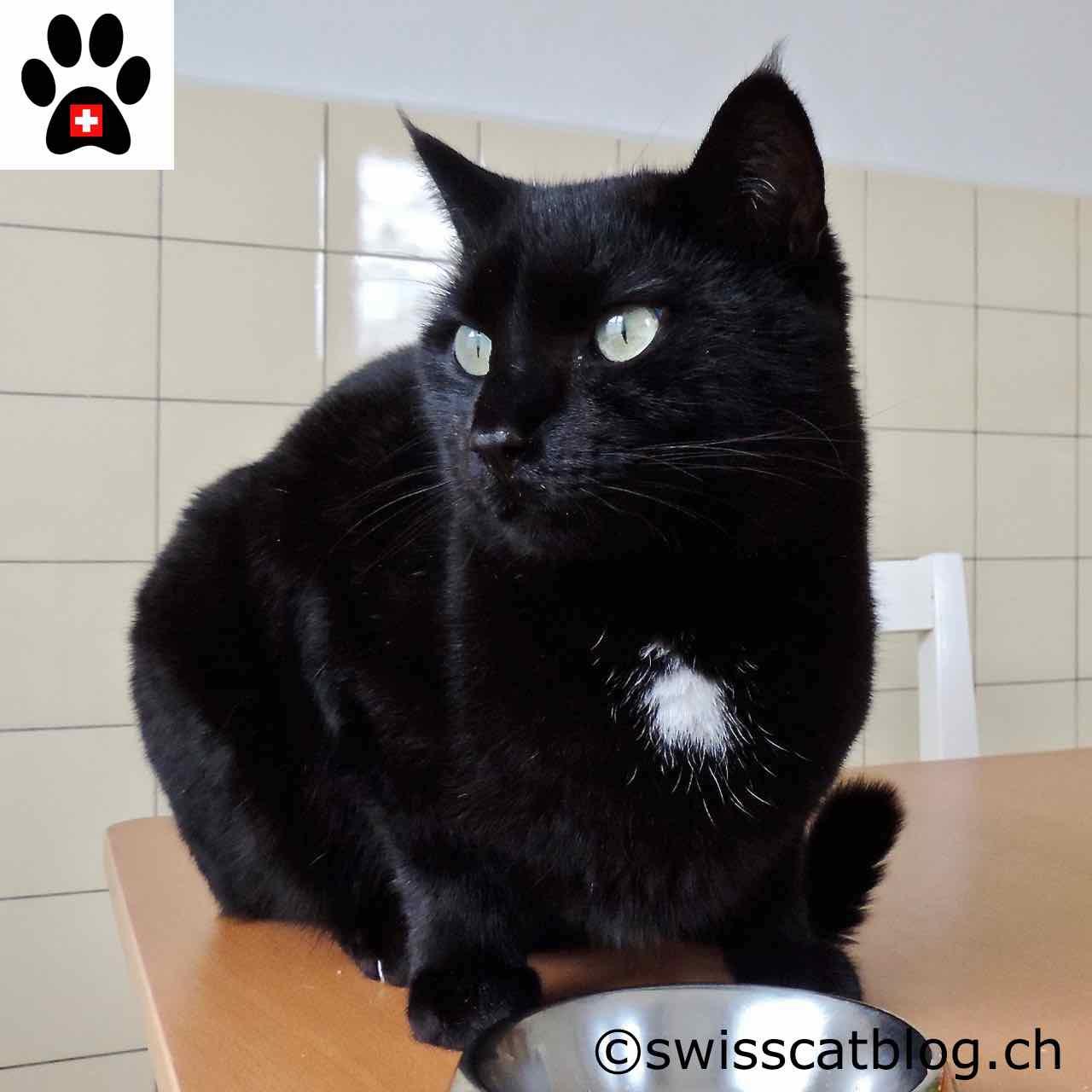 Lalimentazione Del Gatto Introduzione The Swiss Cats