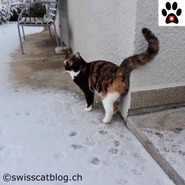 Snow, cold, cold, snow... So boring !