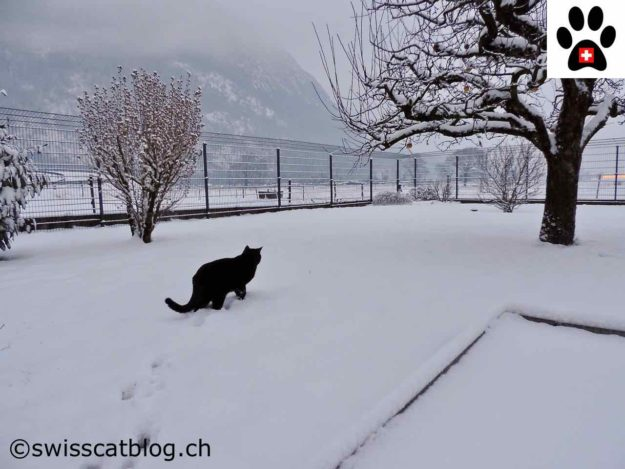garden patrol in the snow