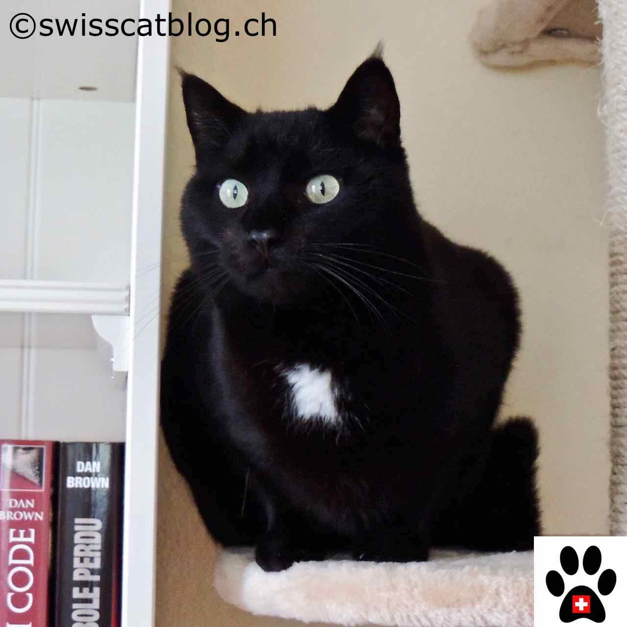 Des Chaussettes Chat Ou Rien The Swiss Cats