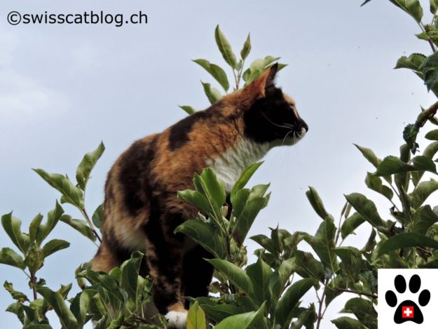 cats and vertical space, in the tree 2