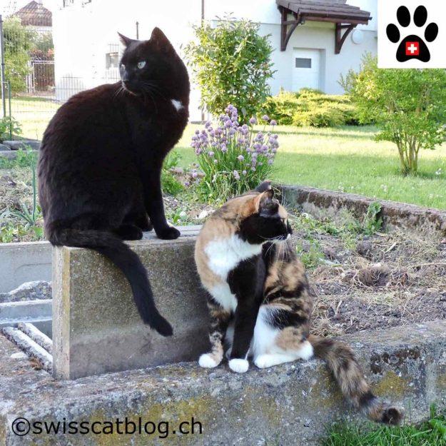 feline communication