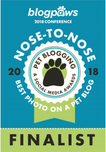 Nose-to-Nose Awards 2018