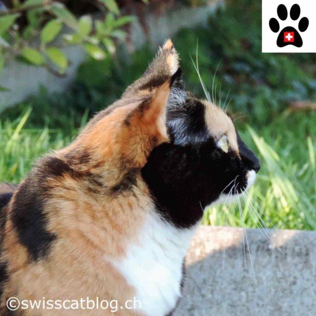Is my cat smart - Pixie wondering