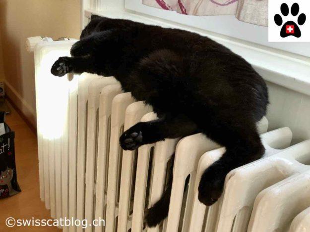 Is my cat smart - Zorro on the heater